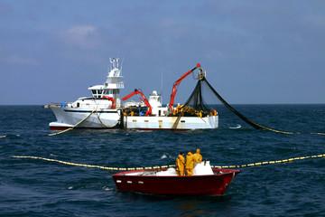 la pêche au thon-29