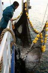 la pêche au thon-32