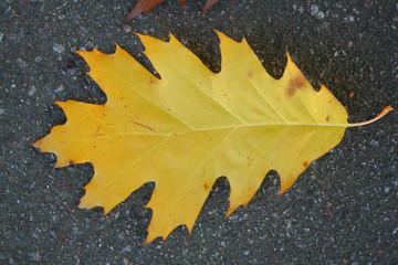 leaf at autumn
