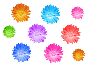 colored heads of flowers