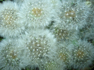 blow - flowers