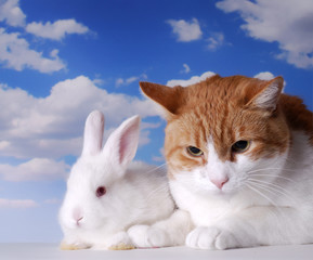 bunny and cat in the studio