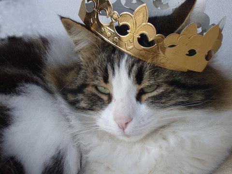 chat des rois