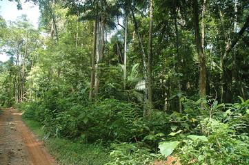jungle trekking path