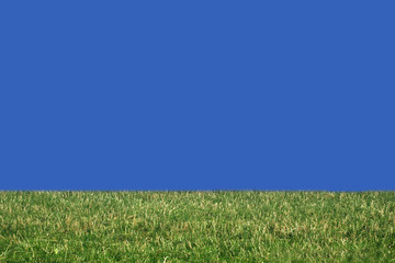 grass with clear blue sky