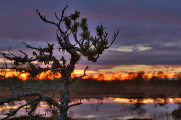 sunset on a bog