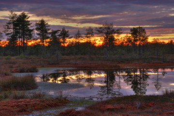 sunrise on bogs