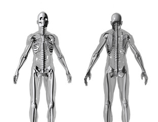 anatomy_fb