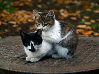 pair of pitiable homeless small cats get warming