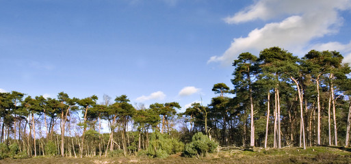 panorama of gorgeous trees