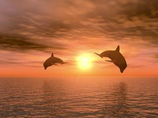 Photo sur Aluminium Dauphins two dolphin