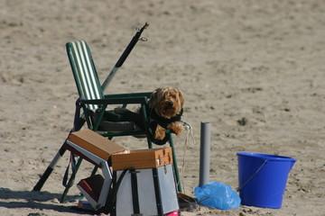 chien pêcheur