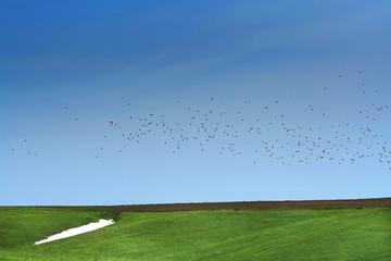 spring. snow, green grass and bird