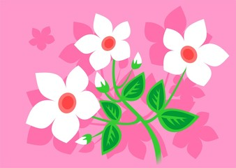 white-pink flowers