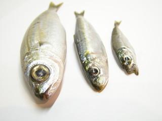 trio de poissons
