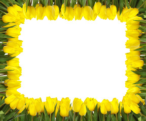 yellow tulips frame