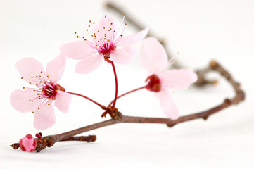 Photos Illustrations Et Videos De Zen Attitude