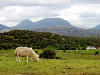 lonely in the scotisch landscape