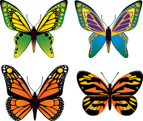 butterfly, vector set