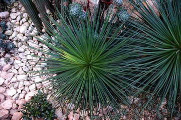 botanic royal
