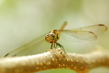 dragonfly on a tree