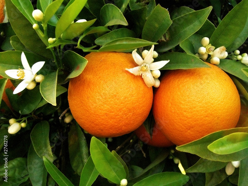 large oranges  Tesco  5 oranges  Open Food Facts