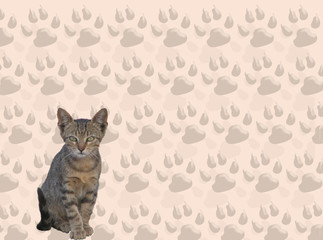 gatto e impronte