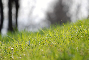 fresh grash zoomed with  telephoto lens