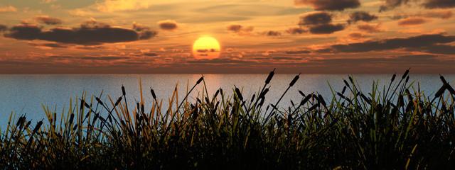Zelfklevend Fotobehang Diepbruine reeds_sunset