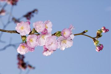 mdg-flower-23