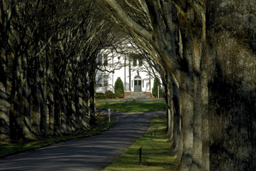 tree lined entry