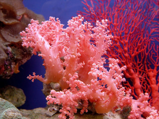 Door stickers Under water beautiful coral