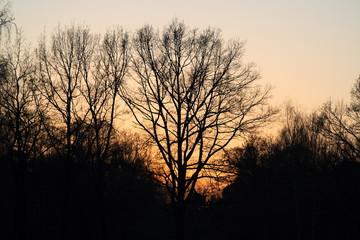 threes in twilight 1