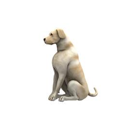 yellow labrador retriever - 01