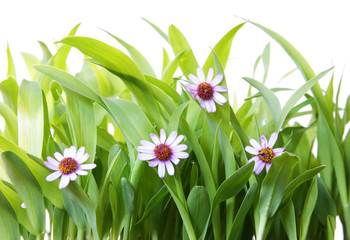 cesped y flores