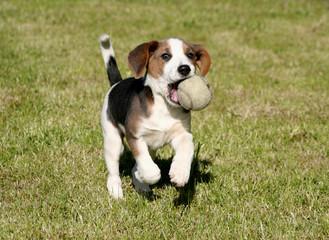 ball please