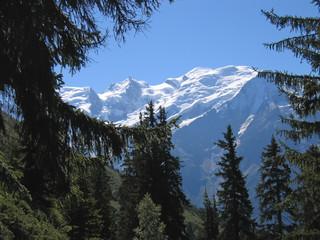 Fotobehang Aan het plafond mountains through fir trees, aiguillette des houches, brevent, f