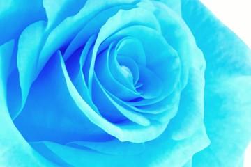 blue neon rose