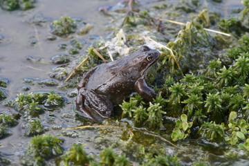 frog in pool of water