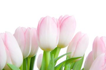 Fototapeta bouquet of tulips obraz