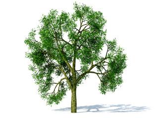 arbre vert seul