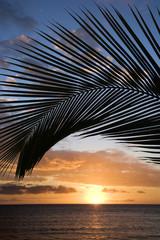 sunset framed by palm, maui, hawaii.