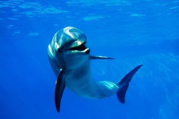 Papiers peints Dauphin delfín