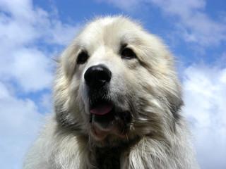 happy big dog