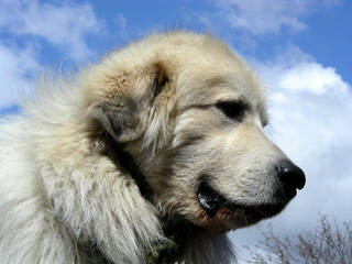 big dog better side