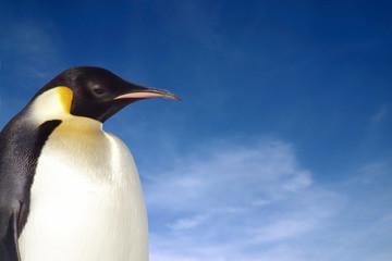 penguin close-up
