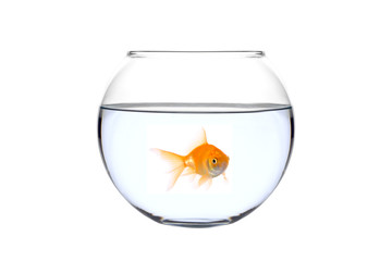search photos gold eyes. Black Bedroom Furniture Sets. Home Design Ideas