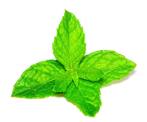 mint leaves isolated