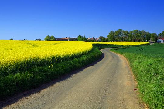 route de campagne et colza