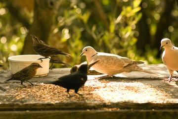 Birds feeding grains in a park